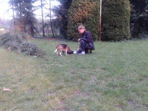 Hondentraining door handleidinghond