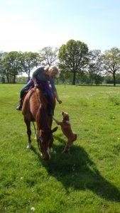 Honden en paard, training door handleidinghond
